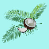 Coconut and palm leaves vector  illustration on blue background. Stock Image