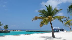 Coconut palm in maldives paradise. Holiday in a sunny day with turquoise ocean and white boat Stock Photography