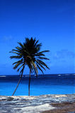 Coconut palm and ocean Royalty Free Stock Photos