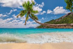 Coconut palm over beach stretch into the sea. Beautiful beach with palm trees in Seychelles paradise island royalty free stock image