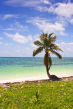 COCONUT PALM in tropical beach Stock Image