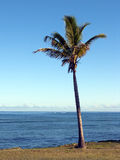 Coconut palm and sea Stock Image