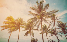 Coconut palm on sea beach Royalty Free Stock Image