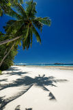 Coconut palm with shadow on sandy beach Stock Photography