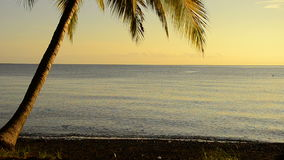 Coconut palm in sunrise at the ocean stock footage
