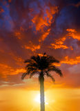 Coconut palm on sunset Stock Photos