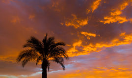 Coconut palm on sunset Stock Photo