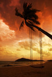 Coconut palm with swings on beach Stock Images