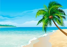 Coconut palm tree. Vector illustration  of coconut palm tree on tropical beach - Horizontal format Royalty Free Stock Images