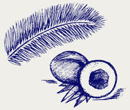 Coconut and palm tree. Doodle style. Vector Royalty Free Stock Photo