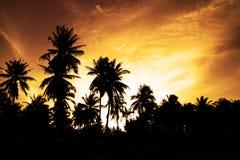 Coconut palm tree. Shadow of coconut palm tree Stock Photography