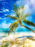 Coconut palm tree above white sand and turquoise tropical sea stock images