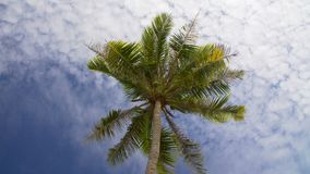 Coconut palm tree against blue sky stock video footage