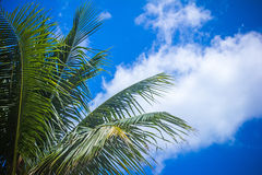 Coconut palm tree against blue sky. Thailand Stock Photo