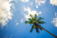 Coconut palm tree against blue sky. Thailand Stock Photos
