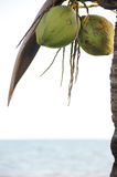 Coconut palm tree on the beach Stock Photo