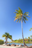 Coconut palm tree on beach Stock Photos