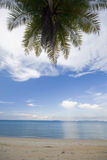 Coconut palm tree on a beach. Royalty Free Stock Photo