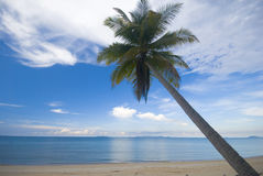 Coconut palm tree on a beach. Royalty Free Stock Photography