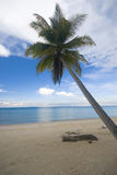 Coconut palm tree on a beach. Stock Photo