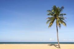 Coconut palm tree on beach. Stock Image