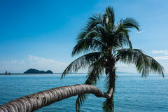 Coconut palm tree on the beach Stock Image