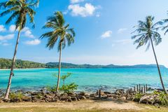 Coconut palm tree on the beach and sea. Beautiful island paradise with coconut palm tree around sea and beach on white cloud and blue sky - Holiday vacation Stock Images