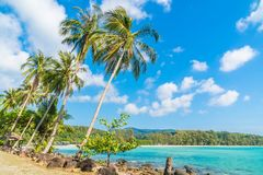 Coconut palm tree on the beach and sea. Beautiful island paradise with coconut palm tree around sea and beach on white cloud and blue sky - Holiday vacation Stock Photography
