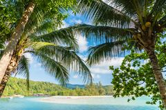 Coconut palm tree on the beach and sea. Beautiful island paradise with coconut palm tree around sea and beach on white cloud and blue sky - Holiday vacation Stock Photos