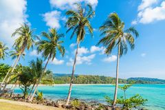 Coconut palm tree on the beach and sea. Beautiful island paradise with coconut palm tree around sea and beach on white cloud and blue sky - Holiday vacation Royalty Free Stock Images