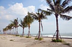 Coconut Palm tree on beach of sea Stock Image