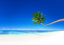 Coconut Palm Tree Beach Summer Seascape Concept Stock Photo