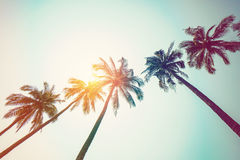Coconut palm tree on beach and sunlight with vintage toned effec. T Royalty Free Stock Photos