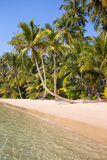Coconut palm tree on the beach, Thailand Royalty Free Stock Photography