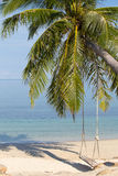 Coconut palm tree on the beach, Thailand Royalty Free Stock Images