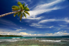 Coconut palm tree on beautiful island. Palm tree against blue sky and sea on island beach Stock Photography