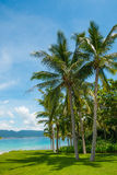 Coconut palm tree with Beautiful Tropical beach Stock Photography