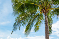 Coconut palm tree on Beautiful Tropical beach Stock Photo