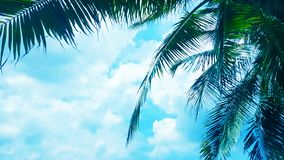Coconut palm tree on Blue clouds sky background, beautiful view landscape. Ecology texture, wallpaper design stock images