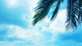 Coconut palm tree on Blue clouds sky background, beautiful view landscape. Ecology texture, wallpaper design royalty free stock photos