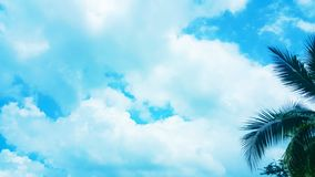 Coconut palm tree on Blue clouds sky background, beautiful view landscape. Ecology texture, wallpaper design stock photo