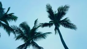 Coconut palm tree on Blue clouds sky background, beautiful view landscape. Ecology texture, wallpaper design stock photos