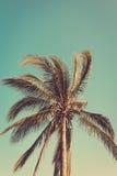 Coconut palm tree Stock Photo
