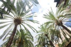 Coconut palm tree on blue sky background. Royalty Free Stock Photo