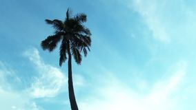 Coconut palm tree with blue sky background and copy space area, loop. Coconut palm tree with blue sky background stock footage