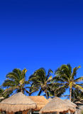 Coconut palm tree blue sky hut palapa sun roof Stock Photo