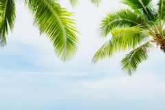 Coconut palm tree with blue sky for summer holiday and vacation royalty free stock photo
