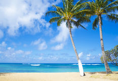 Coconut Palm tree with curfboard in Hawaii Stock Photos