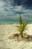 Coconut palm tree at empty tropical beach Royalty Free Stock Photography