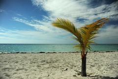 Coconut palm tree at empty tropical beach Royalty Free Stock Images